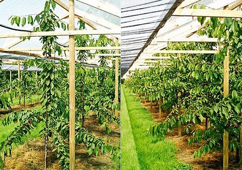 Erdbeerhof Dammann <br> Frische Erdbeeren und Kirschen vom Erdbeerhof Dammann.